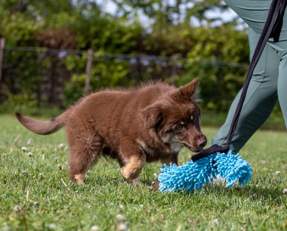 opvoeding puppyfun